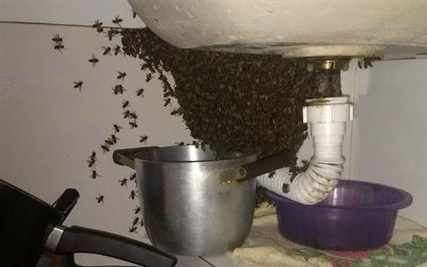 abelhas-pia.jpg