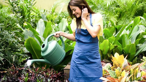limpeza e aguar plantas.jpg