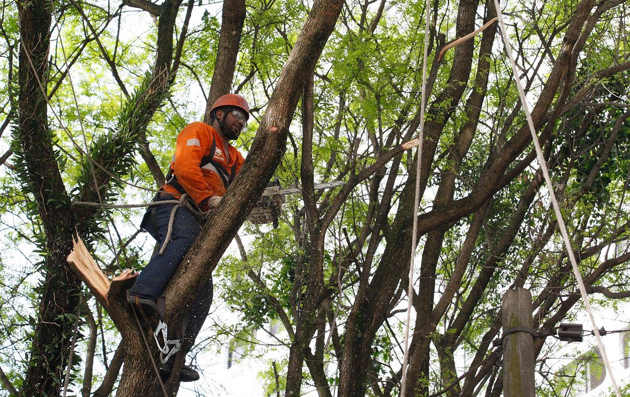 poda-árvore-fortaleza-ceará.jpeg