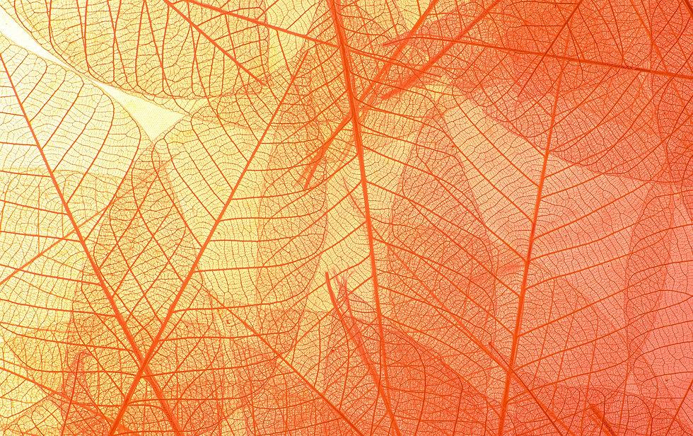 feuilles%20transpartantes%20orange_edite