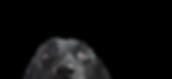 Closeup%252520of%252520a%252520Black%252
