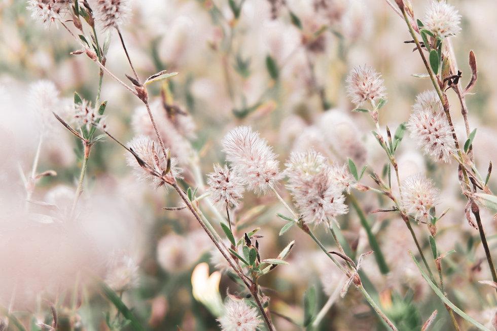 flowers-5820050.jpg