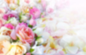 Roses flowers and petals background..jpg