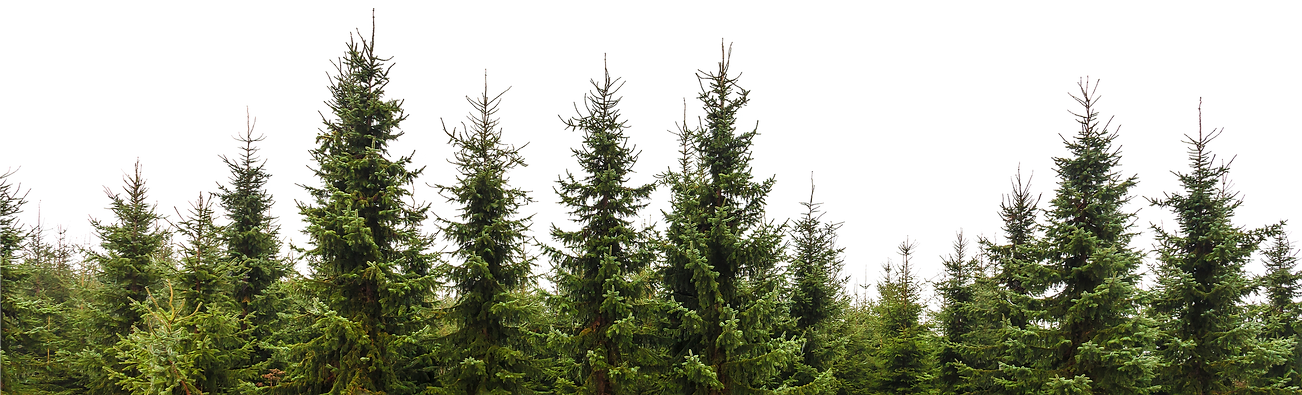 NicePng_forest-trees-png_934017.png