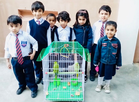Pre-school learning about parrots today.