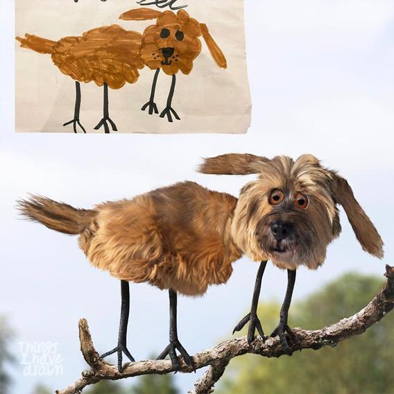 Bird Dog by Emily