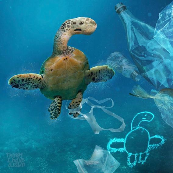 Turtle by Al