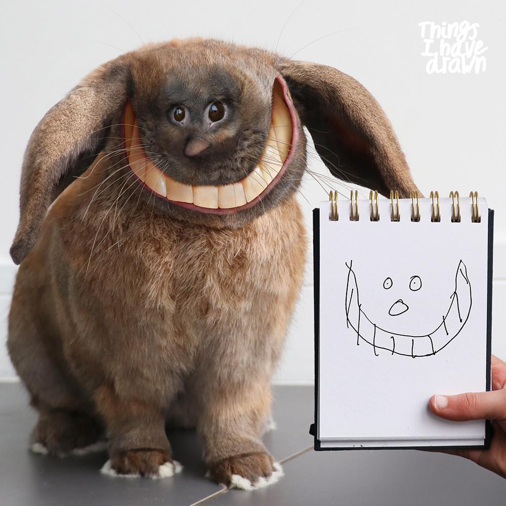 Hazel the Rabbit