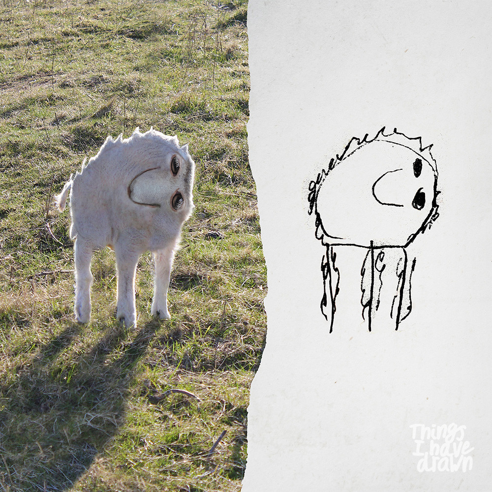 Sheep by Dom