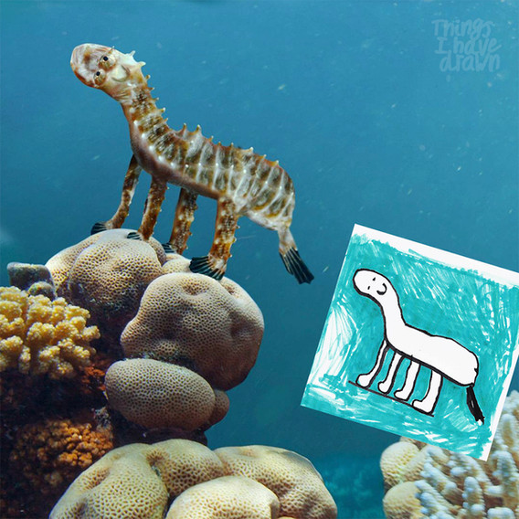 Seahorse by Dom