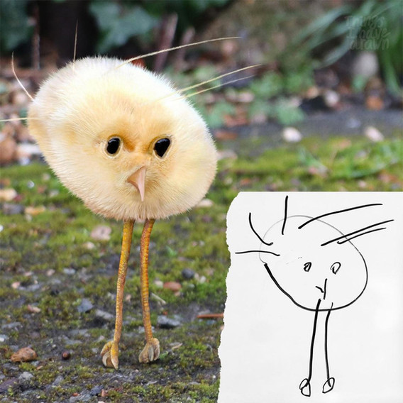 Chick by Babak