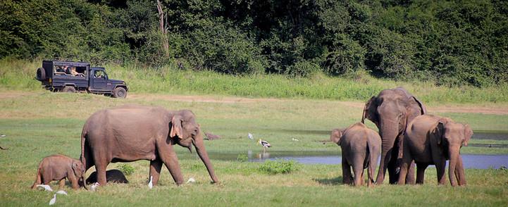 SnowLion Elephant safari.jpg