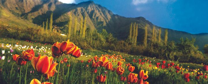 tulip garden 1.jpg