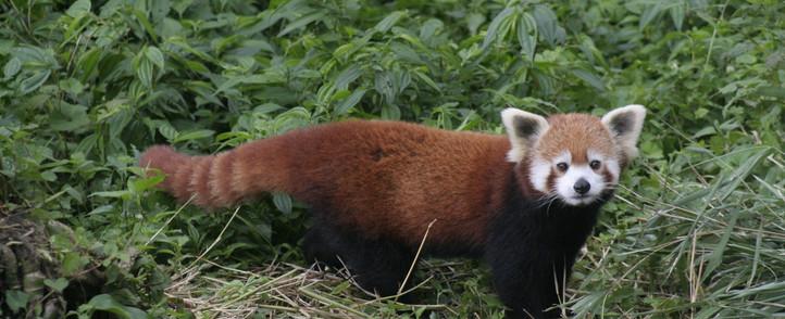 read-panda-3840674.jpg
