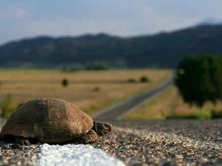 Tough Job Search? Don't be a Turtle!
