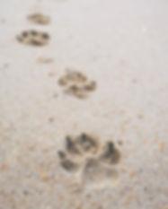 empreinte-du-chien-marchant-plage_35708-