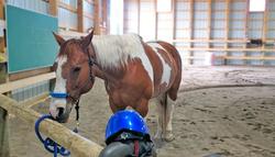 Tulsa Horse