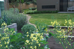 Working kitchen garden