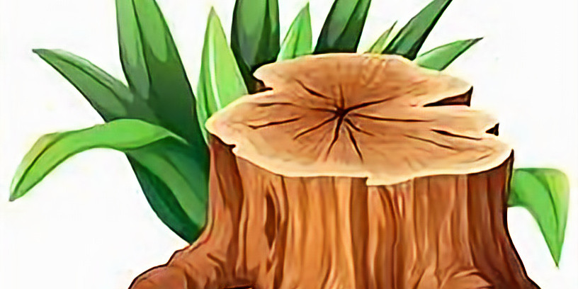 Havana WoodFest Event