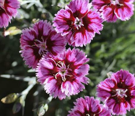 10 No-Effort Plants for a Foolproof Landscape