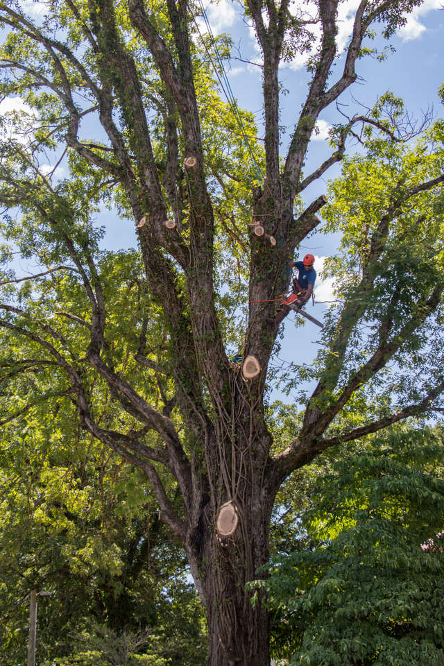 Edited Tree.jpg