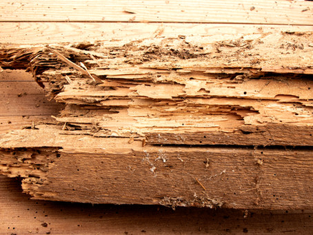 Termites Did What?!