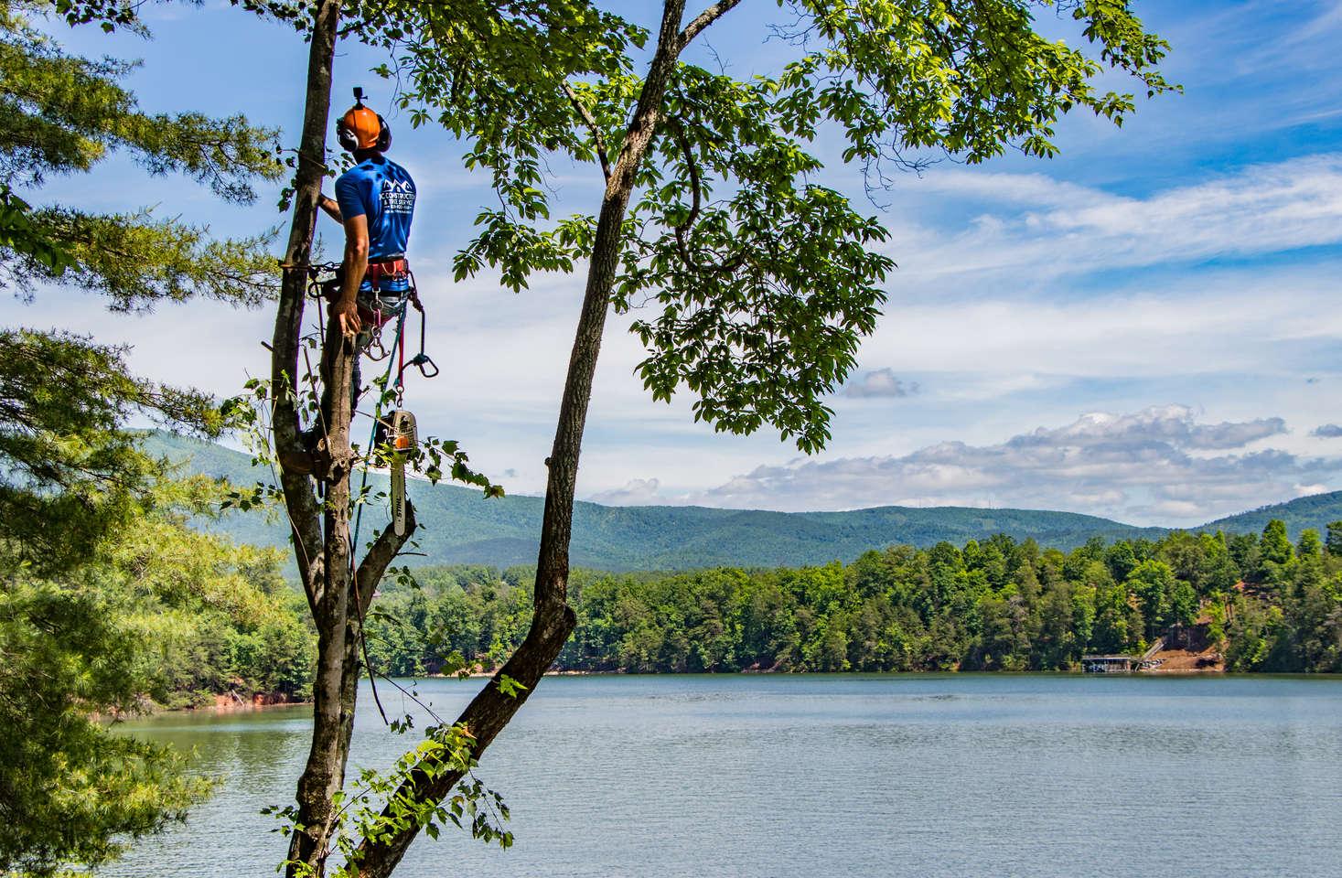 Lake James Tree Views.jpg