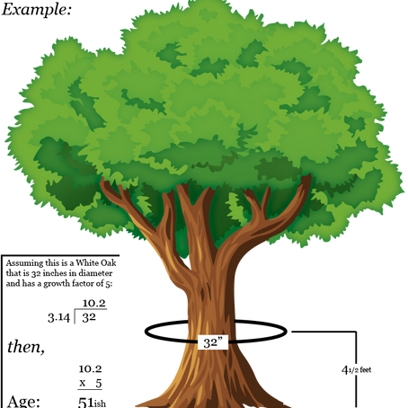 How to Determine's a Tree's Age WITHOUT Cutting it Down