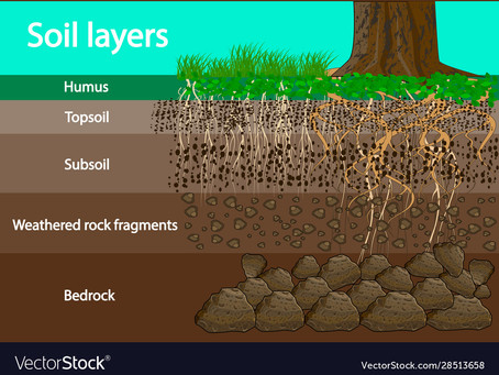 Soil Layers and How They Relate to You