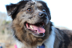 Adorable dog at Tamarindo dog park
