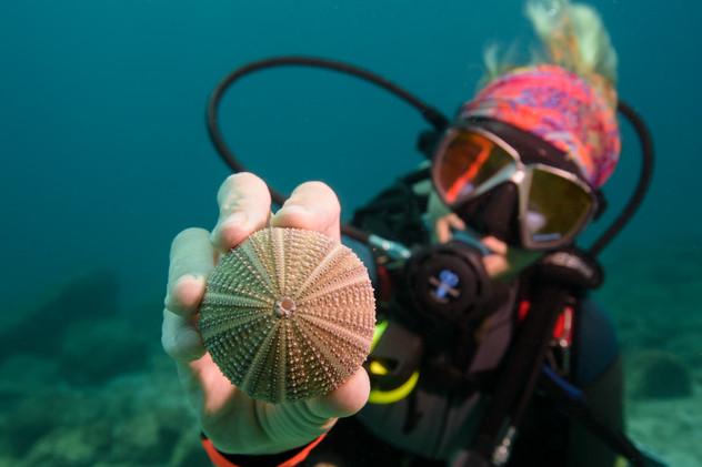 Costa Rica underwater photography