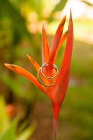Ring shot wedding details on tropical flower in Costa Rica