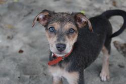 Pet Photographer in Costa Rica