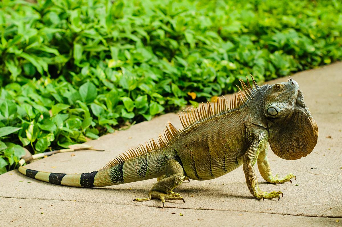 Costa Rica elopement wildlife