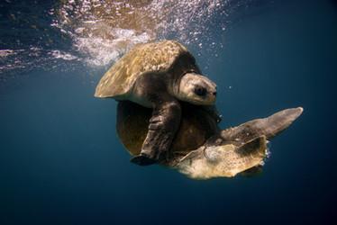 Costa Rica underwater wildlife photography