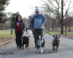 Pet Photography in Atlanta