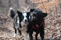 Adorable dogs photos Roswell, GA