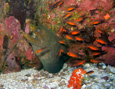 Costa Rica marine life