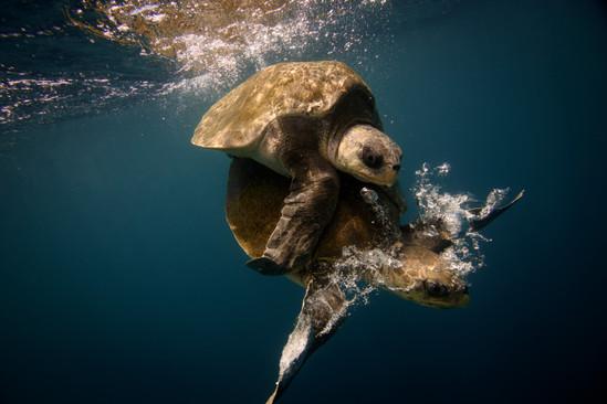 Hire a pro underwater photographer Costa Rica