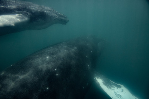 Freelance underwater photographer