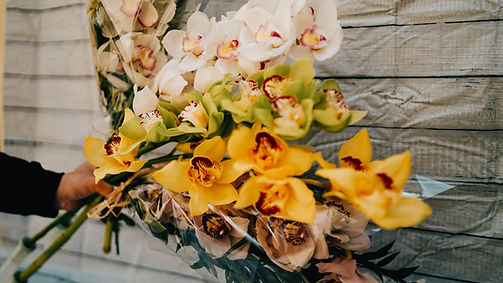 tige fleurs orchidées cymbidium