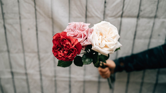 Rose des jardins