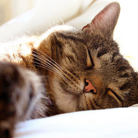 photo cat sleeping.jpg