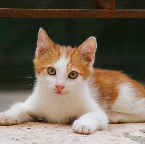 adorable-kitten-corfu-island-2 - Copy.jp