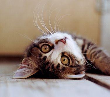 photo - kitten 2.jpg