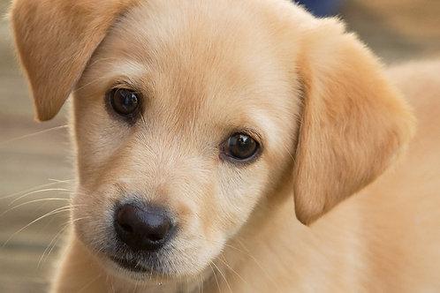 CRAZY GOOD DOG SOCIETY GEAR