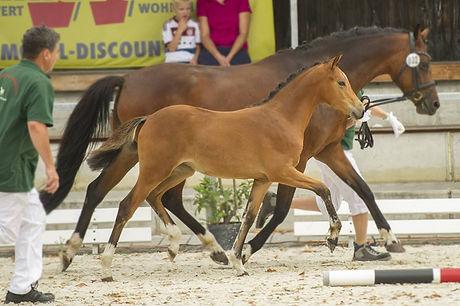 Samira as foal.jpg