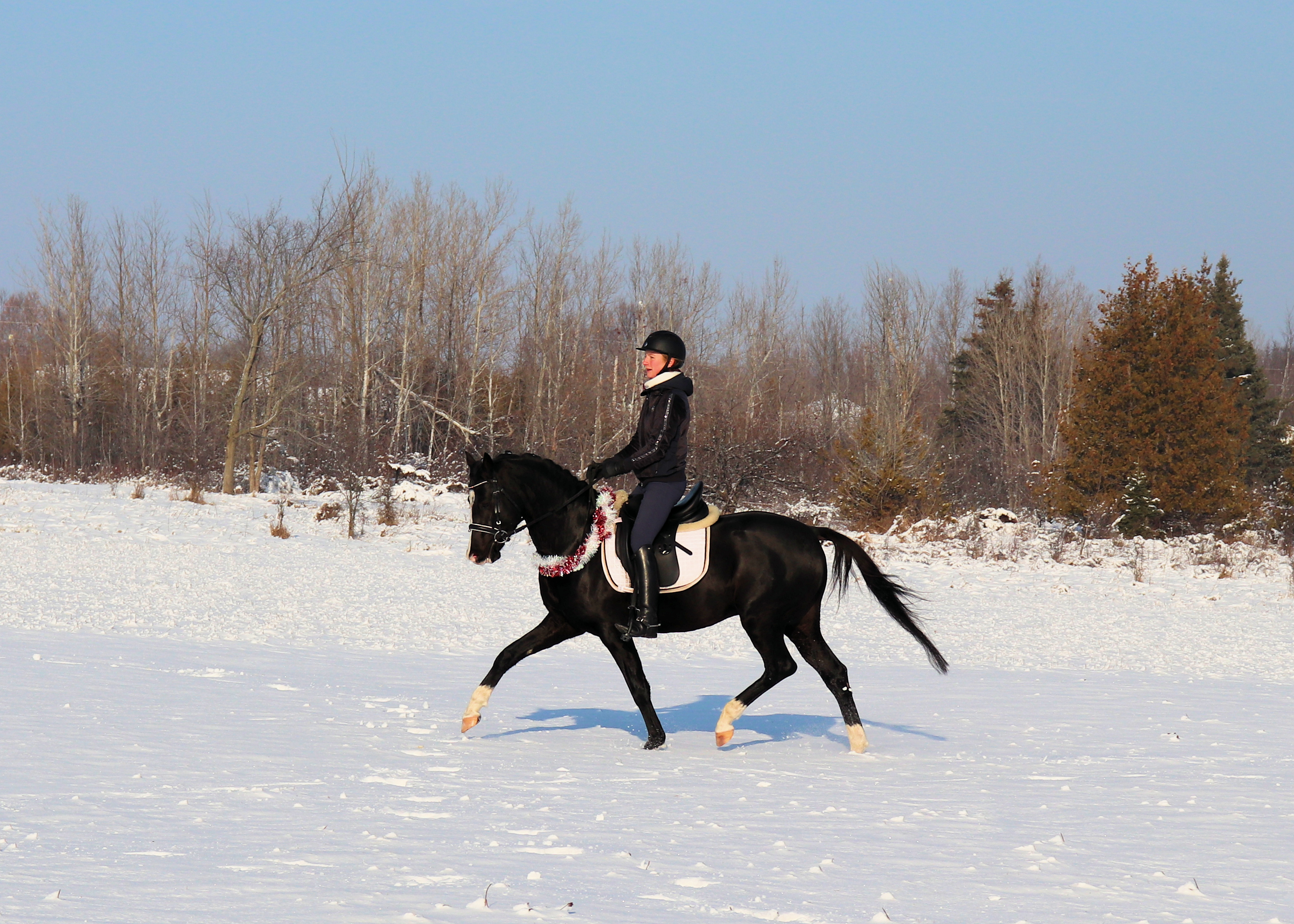 trot under saddle 3