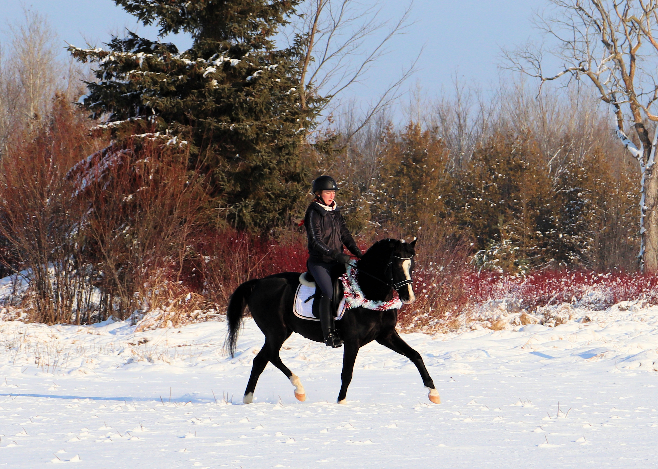 trot under saddle 8