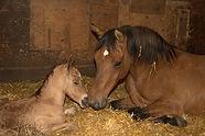 new born w mom 1.jpg
